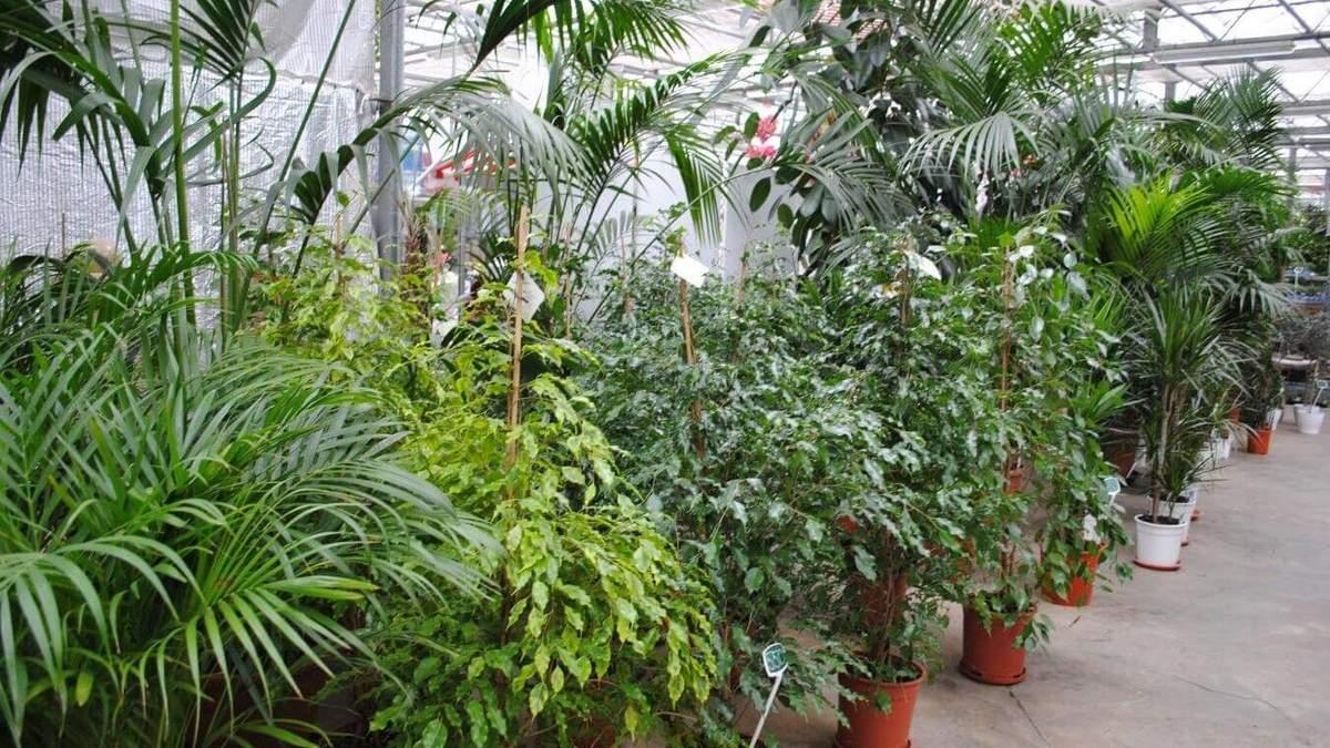 Кімнатні рослини в квартирі – каталог: рослини в спальню
