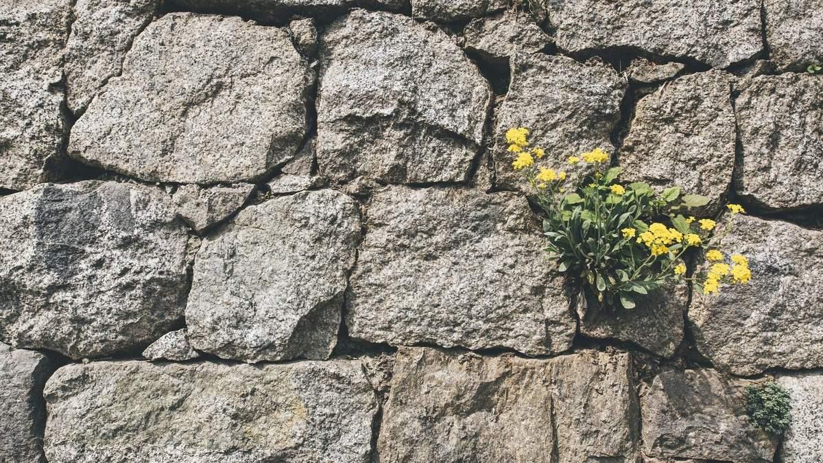 Стіну виставили у вестибюлі