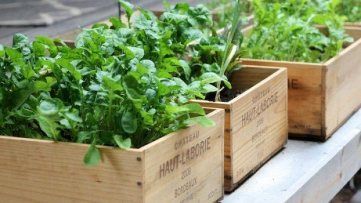 Почему нужно выращивать модный мини-огород на собственной кухне: советы и фото