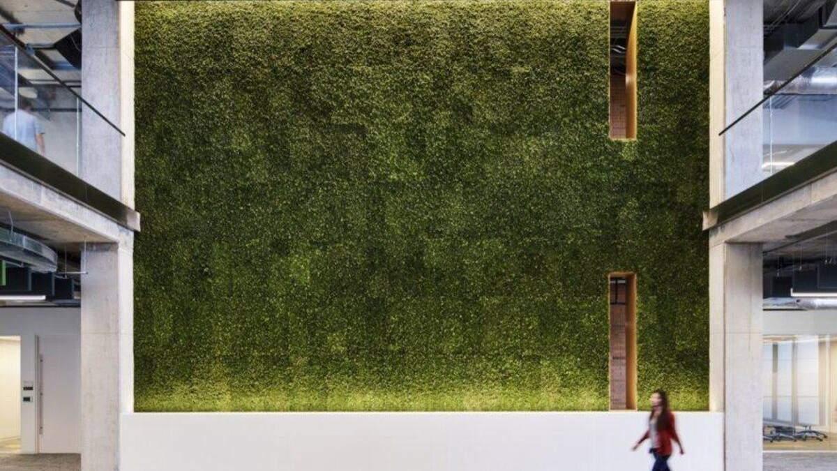 В помещении много зеленых растений