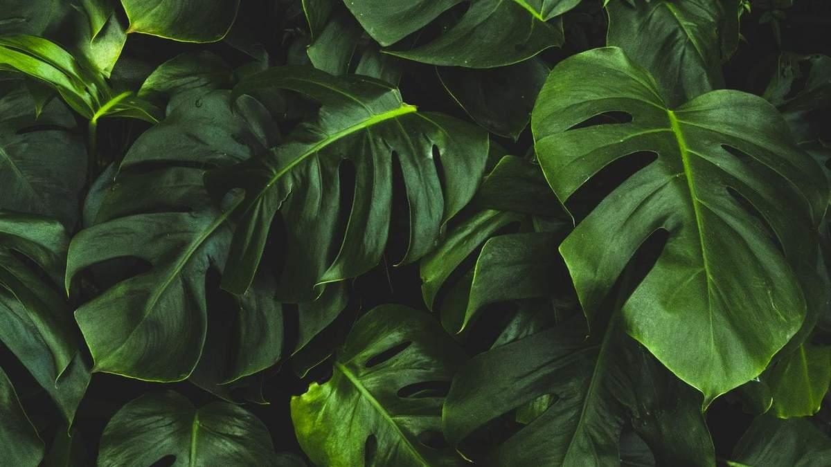 Растения украшают интерьер