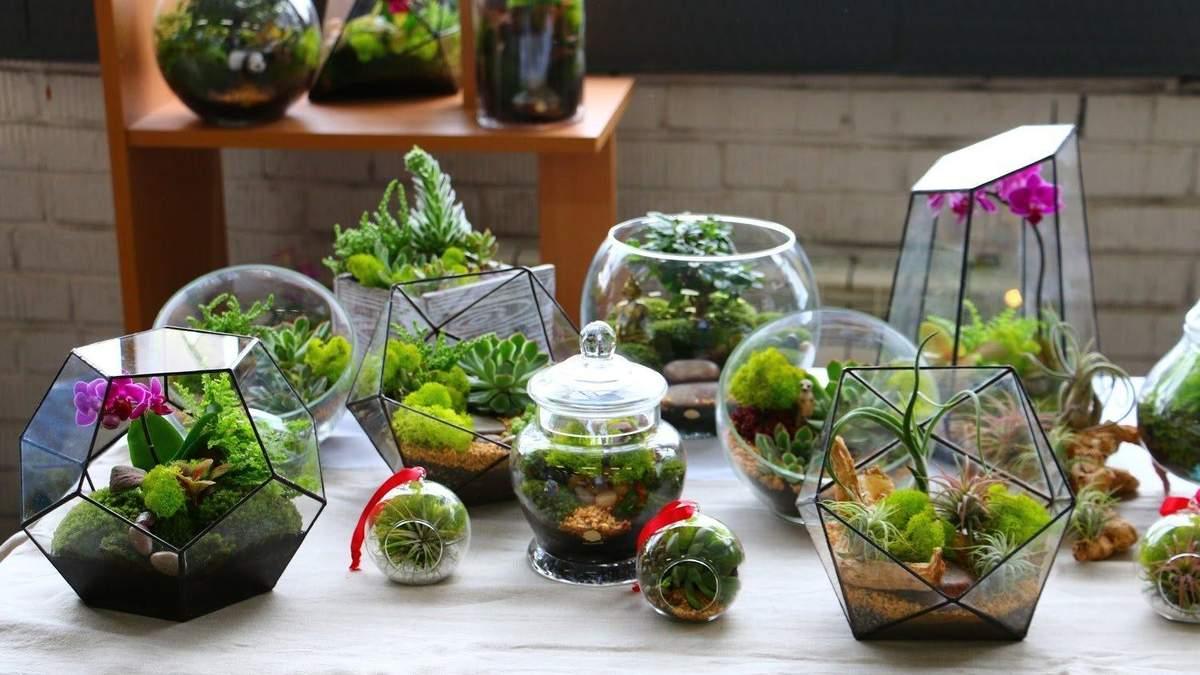 Флораріум в інтер'єрі: як гармонійно поєднати рослини