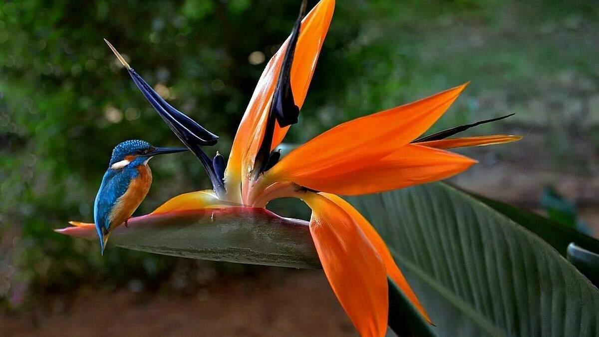 Вазоны с большими листьями: тропические растения для квартиры