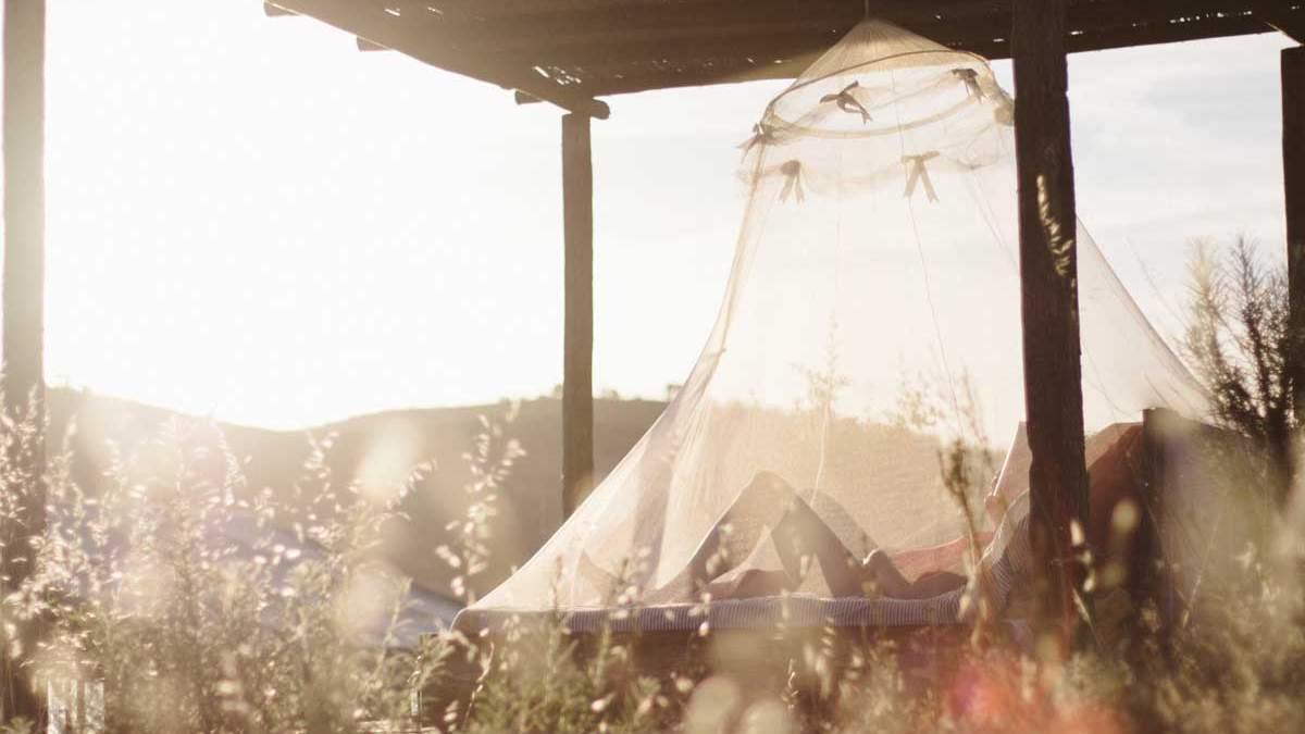 Як запобігти потраплянню комарів у ваш будинок влітку