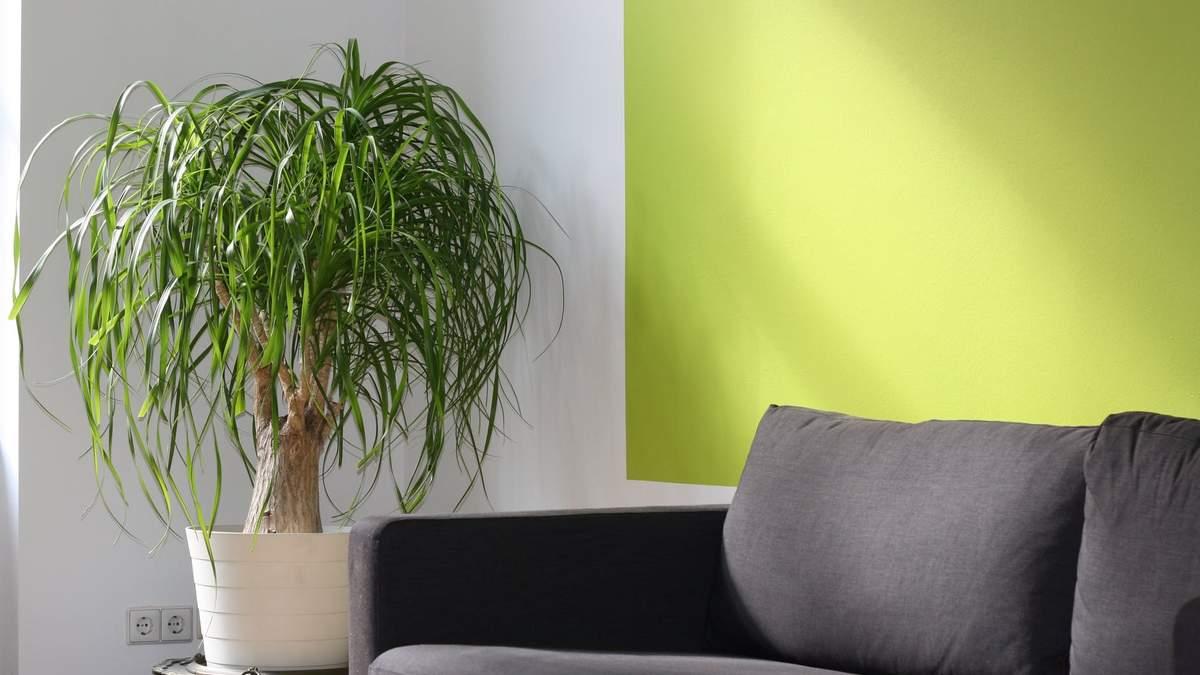 Правила контрасту в інтер'єрі: шпаргалка від декораторки