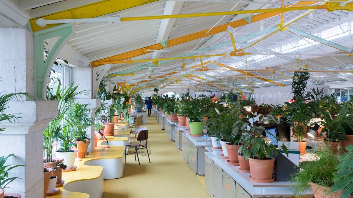 10 красивих ідей для озеленення офісу: підбірка фото - Дизайн 24