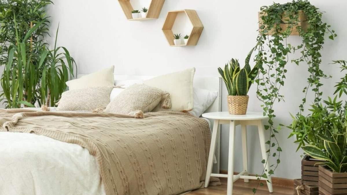 Безпека сну: які рослини не підходять для спальні - Дизайн 24