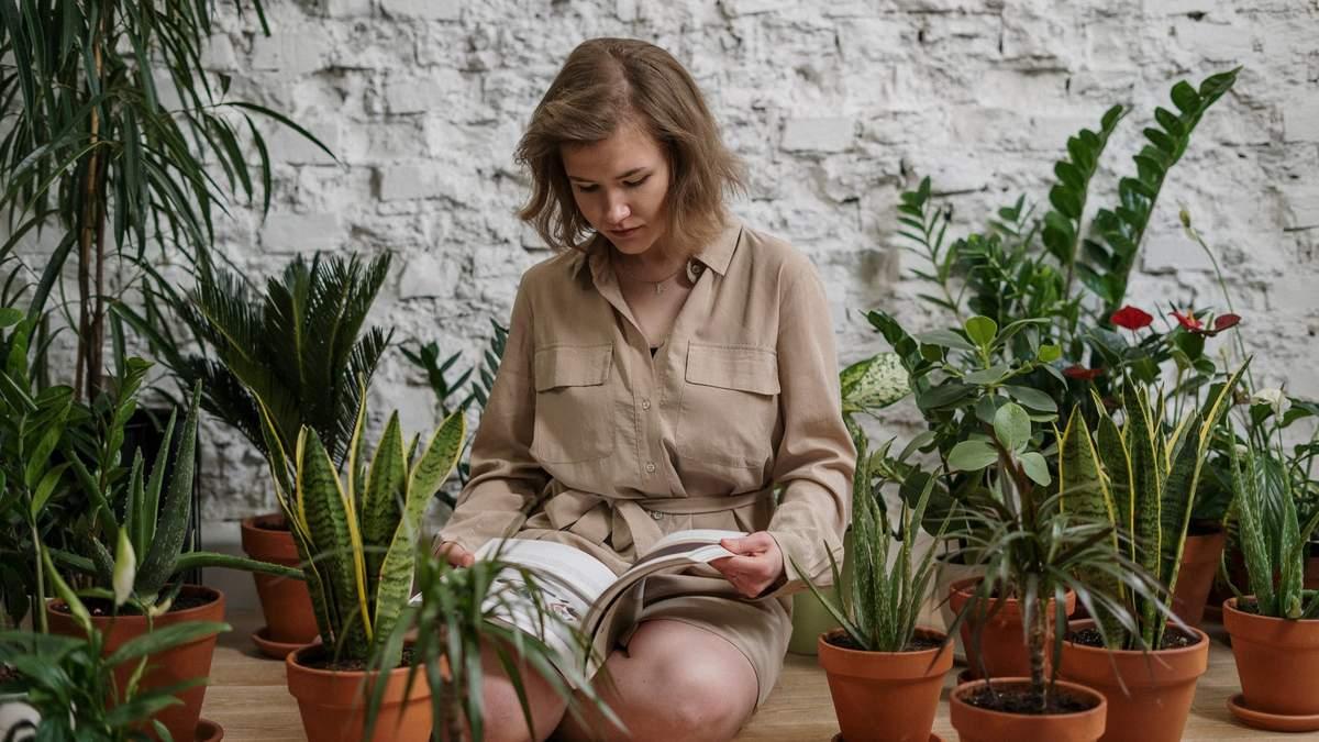 10 кімнатних рослин, які не потребують особливого догляду