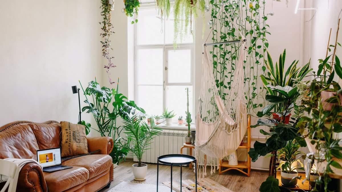Неправильне озеленення інтер'єру: 5 помилок, здатних зіпсувати ваш дім - Дизайн 24