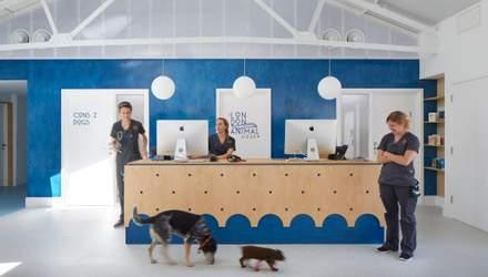 Стильна лікарня для домашніх тварин: фото авторського інтер'єру