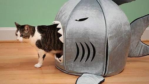 Дизайнерские вещи для котов