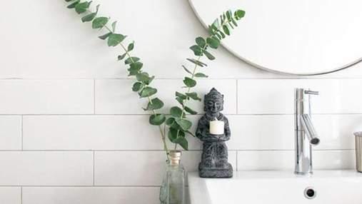 Евкаліпт у ванній: варіанти модного декору