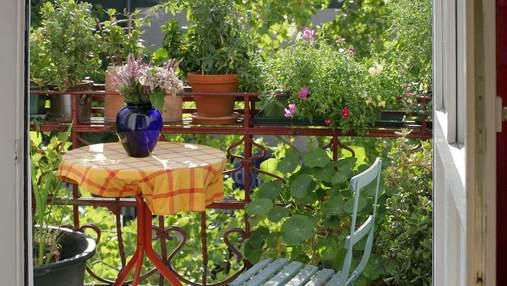 Для балкону чи саду: 3 рослини, які цвітуть протягом всього літа
