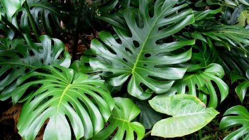 Домашні джунглі: 5 величезних вазонів, що прикрасять будь-який інтер'єр – фото