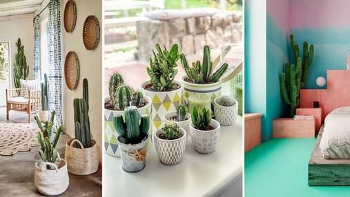 Практичность и долговечность: применение кактусов в дизайне интерьера