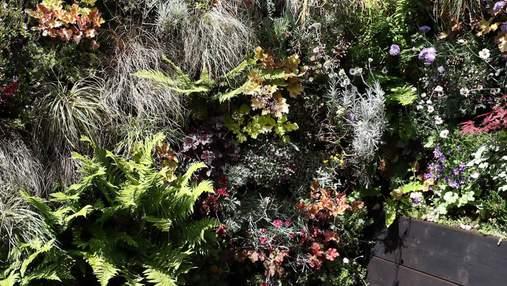Зелений рай: як перетворити зону барбекю на затишний та гостинний куточок